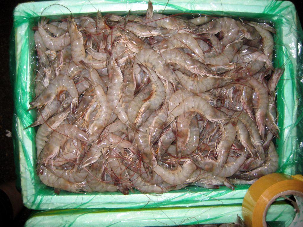 武汉小龙虾养殖_小龙虾养殖价格_武汉虾龙水产养殖专家分析小