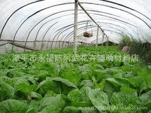 【喜丰特供】9丝 10丝耐老化无滴蔬菜大棚膜