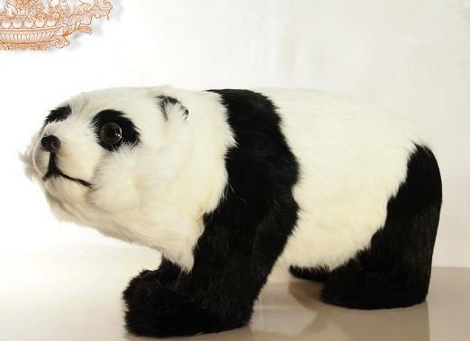 【小型熊猫动物标本幼儿园认识动物教学材料教