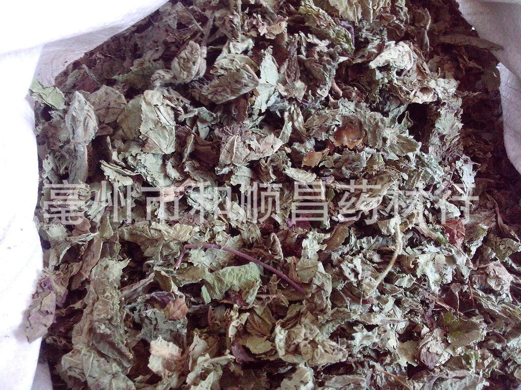 药材批发紫珠叶 紫竹草 大风叶、白狗肠、大叶紫珠 支持验货 实图