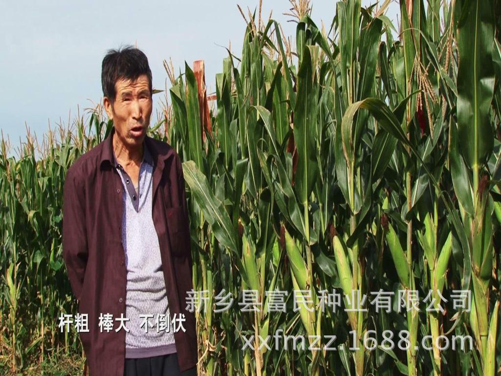 【种地大户 种田能手 土地流转农场主 农民专业
