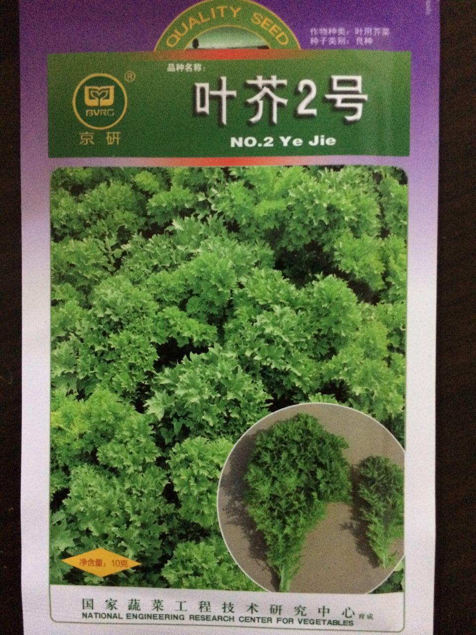 日本芥菜_粒100腌咸菜日本光头芥菜种子大头菜种子盆